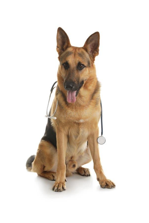 Berger allemand avec le stéthoscope comme Doc. de vétérinaire image stock