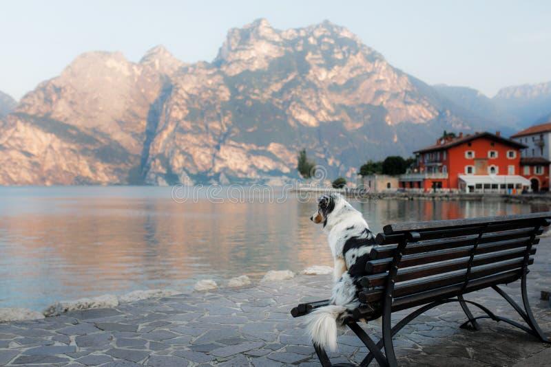 Berger australien au lac dans les montagnes Vacances avec l'animal familier Déplacement avec un chien en Italie images libres de droits