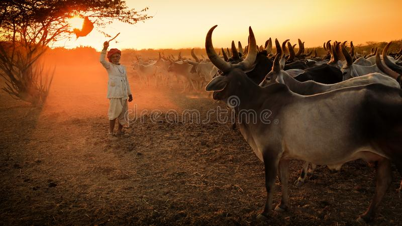 Berger de Rabari dans le secteur de Kutch, Inde images libres de droits