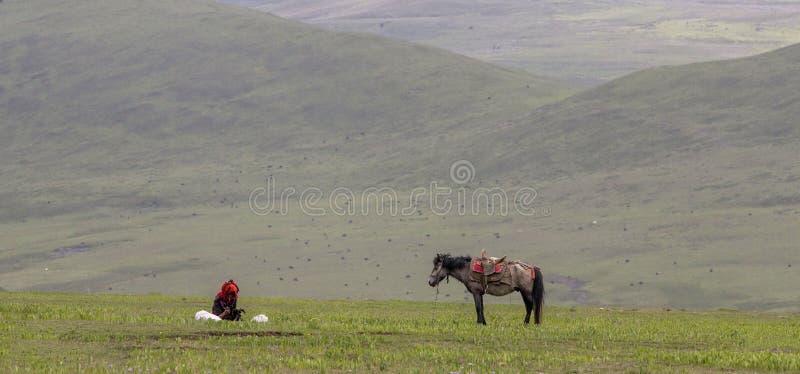 Berger et cheval de yaks images libres de droits
