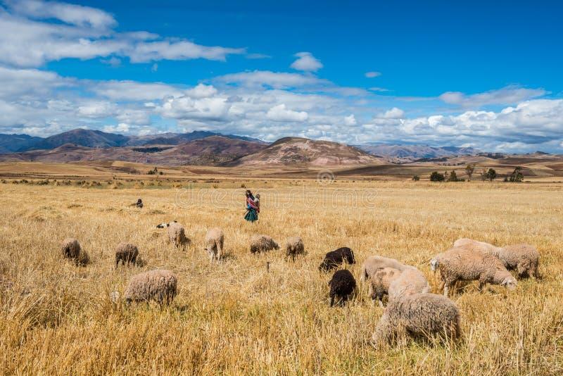 Berger les Andes péruviens Cuzco Pérou de femme photo libre de droits