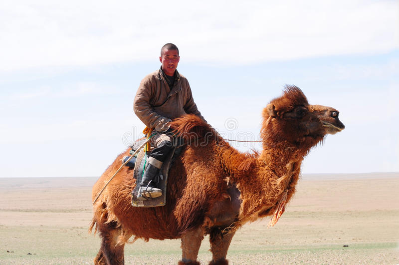 Berger nomade de Mongolain sur son chameau photographie stock libre de droits