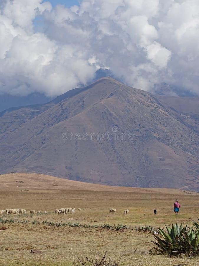 Berger péruvien féminin images stock