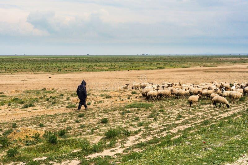 Berger près de Kondar, Tunisie photos libres de droits