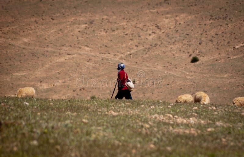 Berger seul et son troupeau dans les montagnes d'atlas marocaines image libre de droits