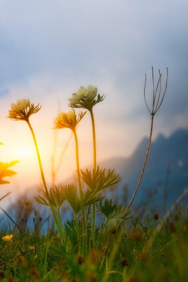 Berget blommar på solnedgången arkivbild
