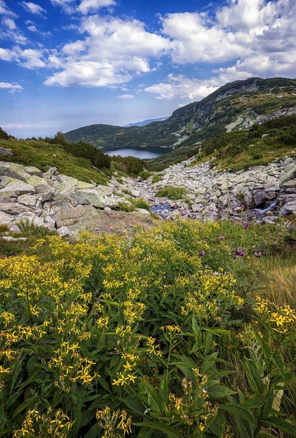 berget med gula blommor framme royaltyfri fotografi
