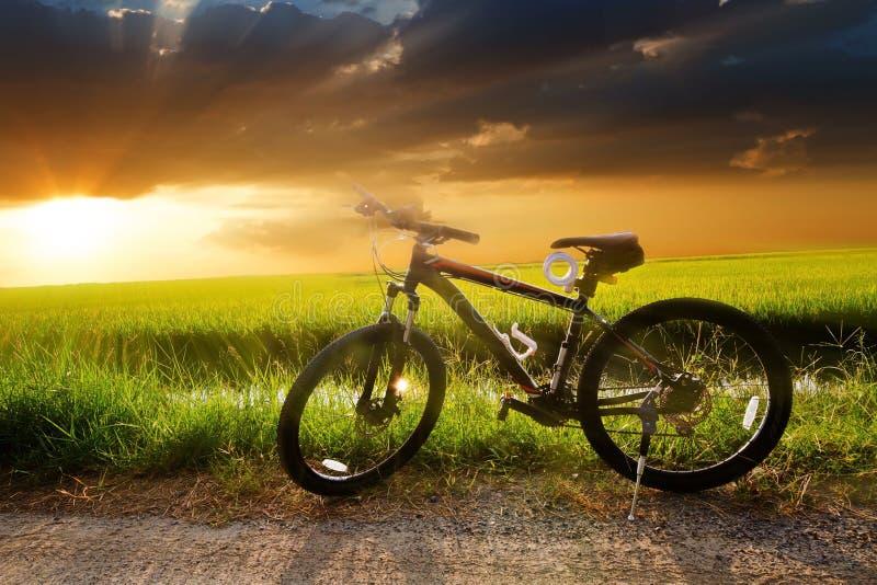 Berget som cyklar ner den nedgående kullen, fastar på cykeln arkivfoto