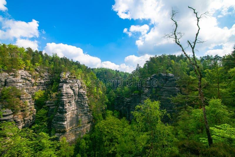 Bergexaltation av skogen royaltyfria foton