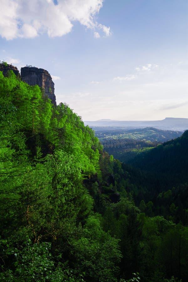 Bergexaltation av skogen fotografering för bildbyråer