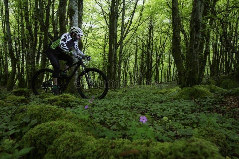 Bergfiets in het bos royalty-vrije stock afbeeldingen