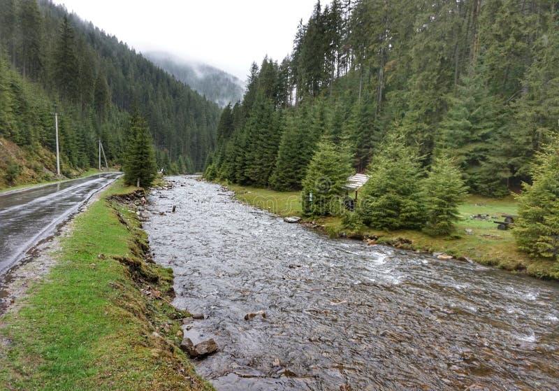 Bergflod efter regn i Carpathiansna arkivbild