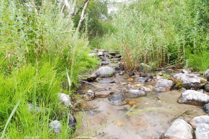 Download Bergflod i natur arkivfoto. Bild av park, brigham, rest - 106832256