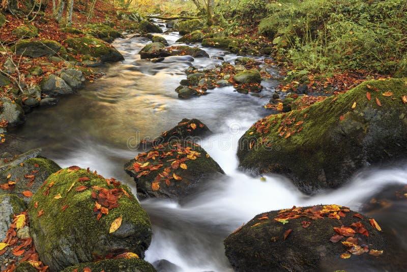 Bergflod i sen höst arkivbilder