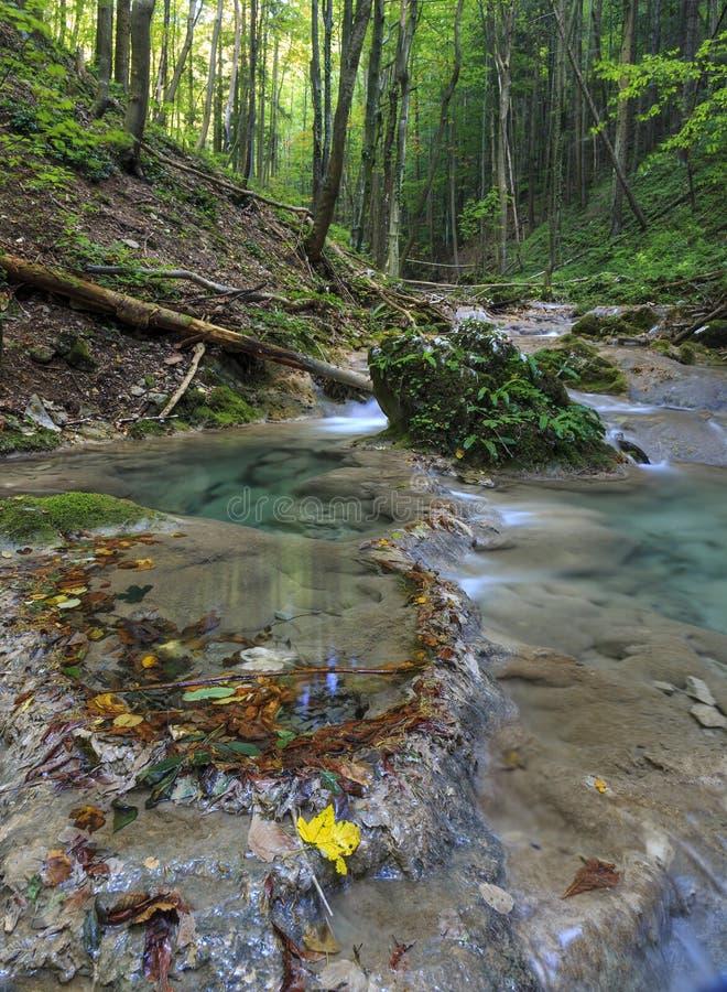 Bergflod i skogen royaltyfria bilder