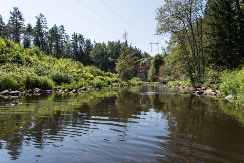 Bergflod i sommar som omges av skogen royaltyfri fotografi