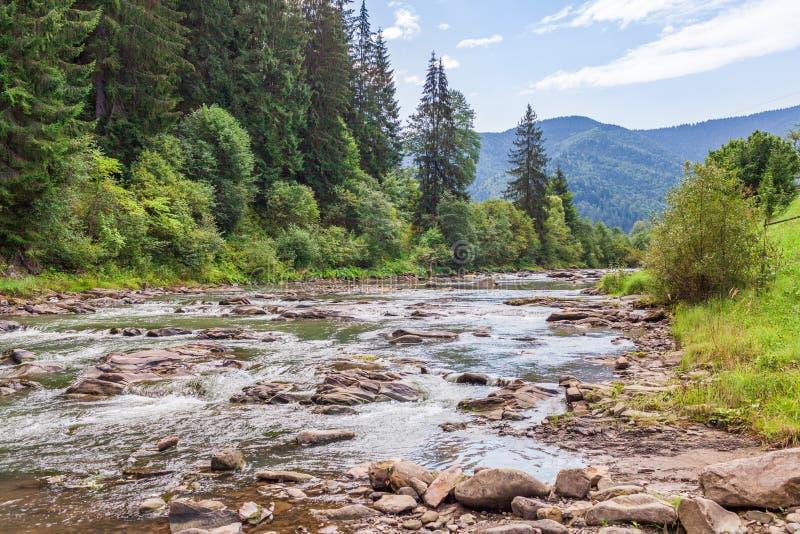 Bergflod med stora stenar och snabbt flödande vatten som omges av kullar med skogen från gröna träd och granar royaltyfri bild