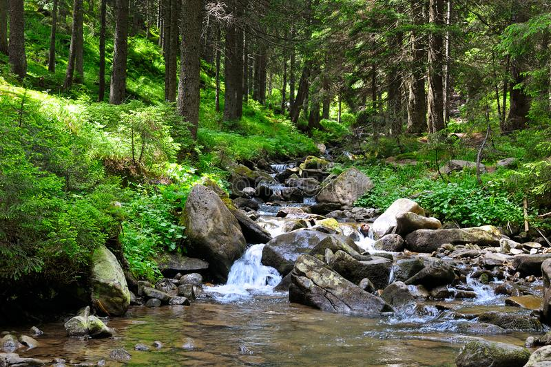 Bergflod och barrskog p? en stenig kust Pittoresk och ursnygg plats royaltyfri fotografi