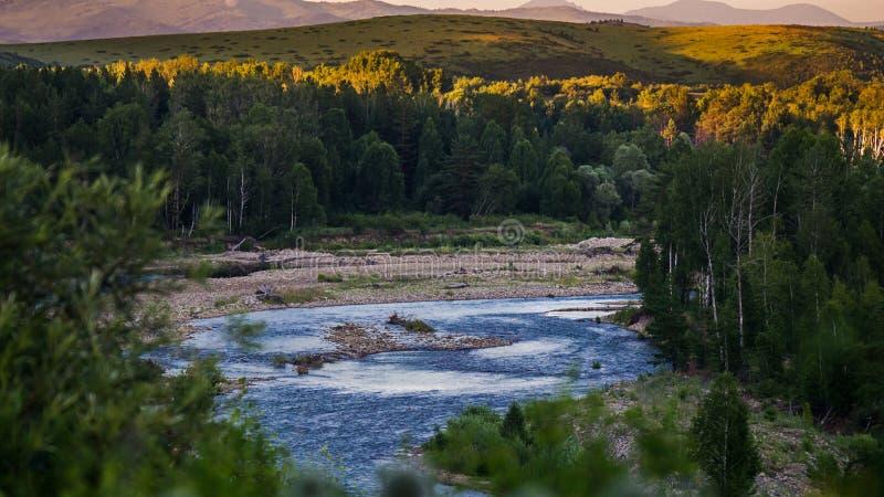 Bergflod- och skogträd på solnedgången, Altai berg, Kasakhstan royaltyfria bilder