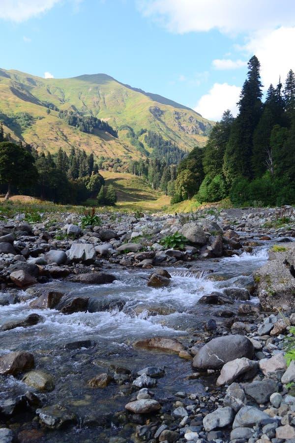 Bergflod på en solig sommardag Caucasian berg, Abchazien royaltyfria bilder