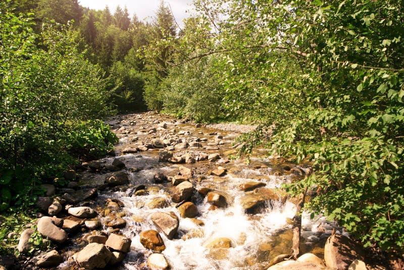 Bergflod som flödar på sommarskoglandskapet royaltyfria foton