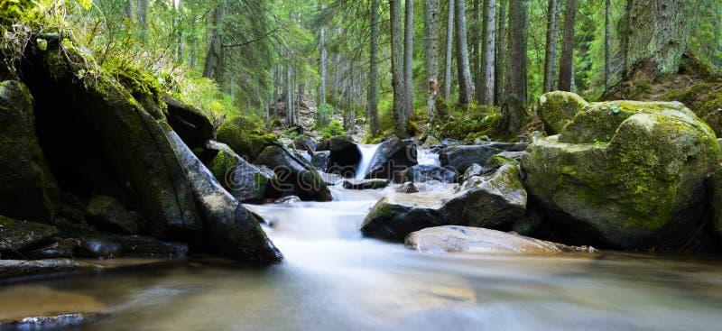 Bergflod som flödar till och med den gröna skogströmmen i trät royaltyfri bild