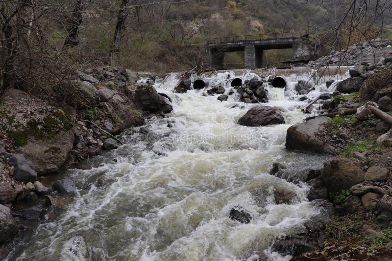 Bergfloden flödar på våren i skogen snabbt royaltyfria bilder