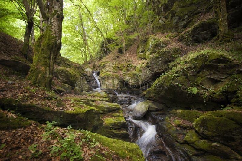 Bergfloden med vaggar royaltyfria foton
