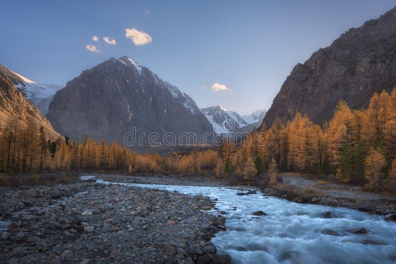 Bergfloden på bakgrunden av höstskogen, snöar korkade berg och blå himmel fotografering för bildbyråer