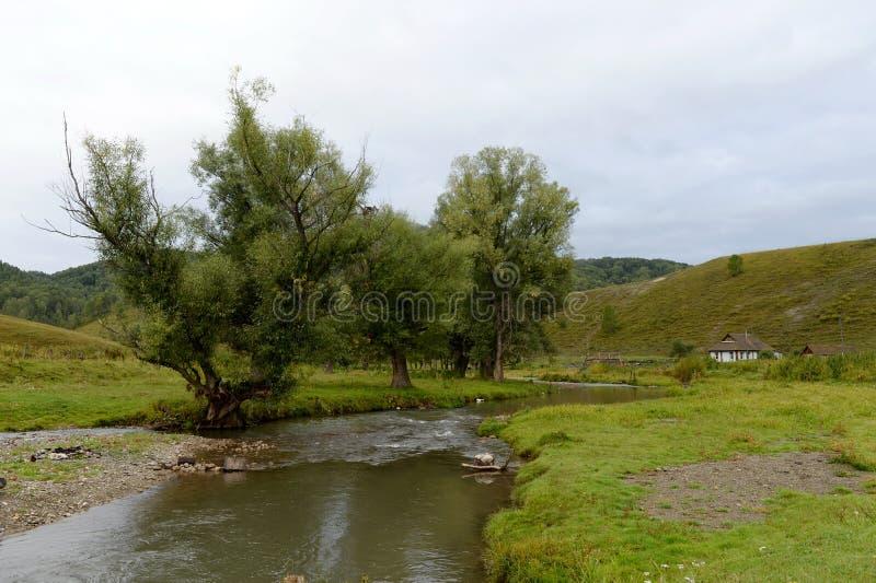 Bergfloden Yarovka i byn av Generalka av det Altai territoriet V?stra Siberia Ryssland royaltyfria foton