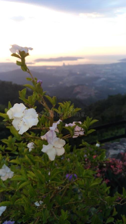 Bergflora stock afbeeldingen