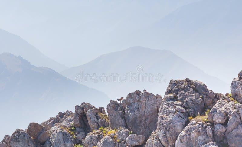 Bergget arkivbild