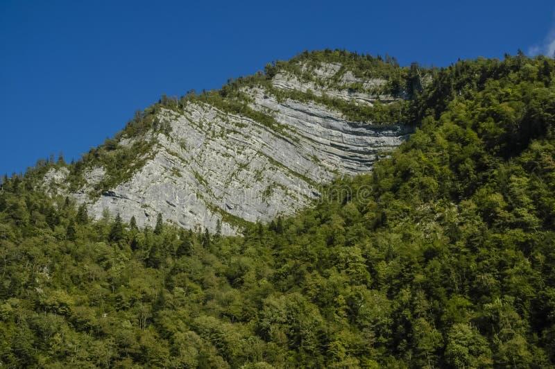 Berghelling met bomen wordt behandeld die stock afbeelding