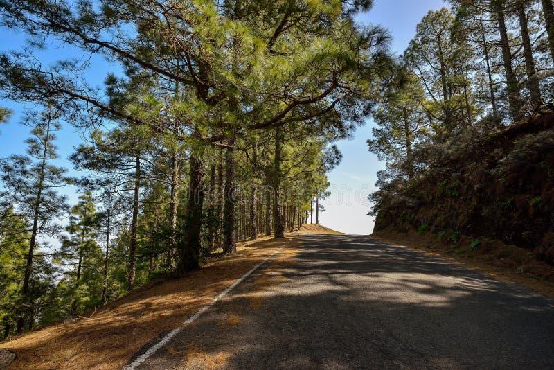 Berghellingsweg in Gran Canaria, Spanje royalty-vrije stock afbeeldingen