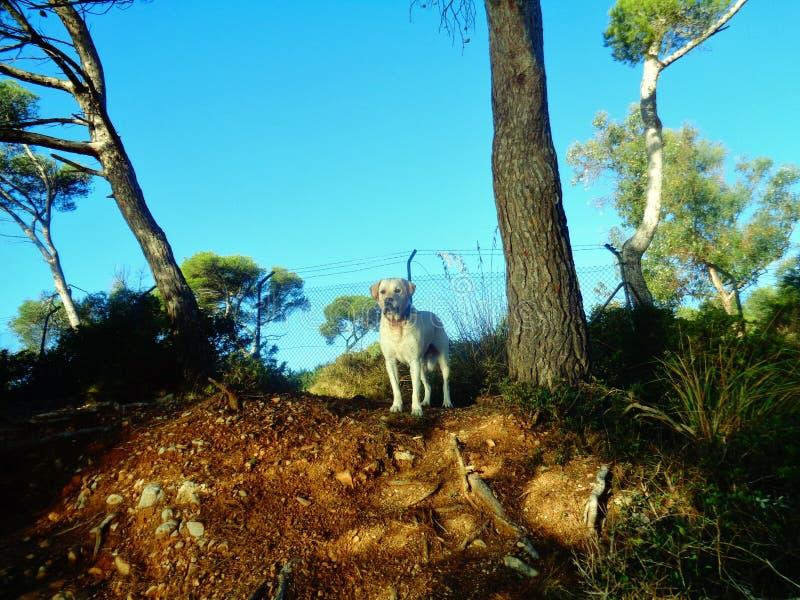 Berghund fotografering för bildbyråer