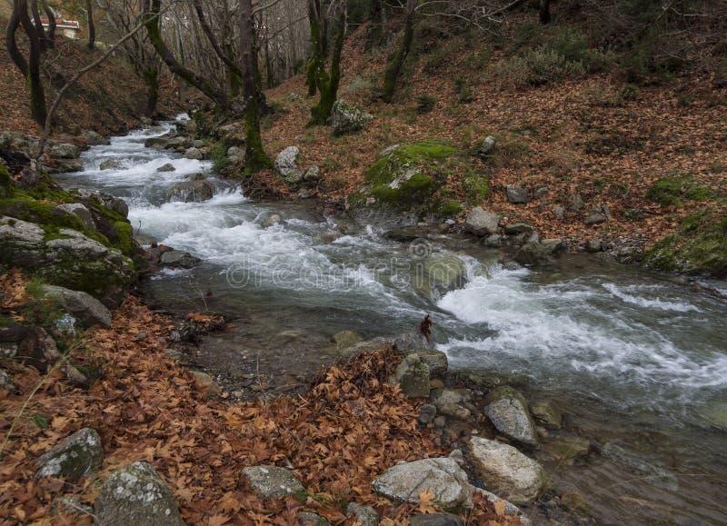 Bergig snabb flod med klart vatten i skogen i bergen Dirfis på ön av Evia, Grekland royaltyfria foton