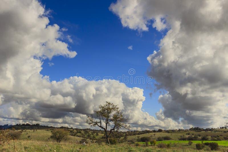 Bergigt landskap för höst Alta Murgia National Park: grässlätten med det lösa mandelträdet dominerade vid moln fotografering för bildbyråer