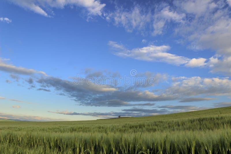 Bergigt landskap med omoget f?r havref?lt som domineras av moln: Alta Murgia National Park Apulia Italien arkivfoton