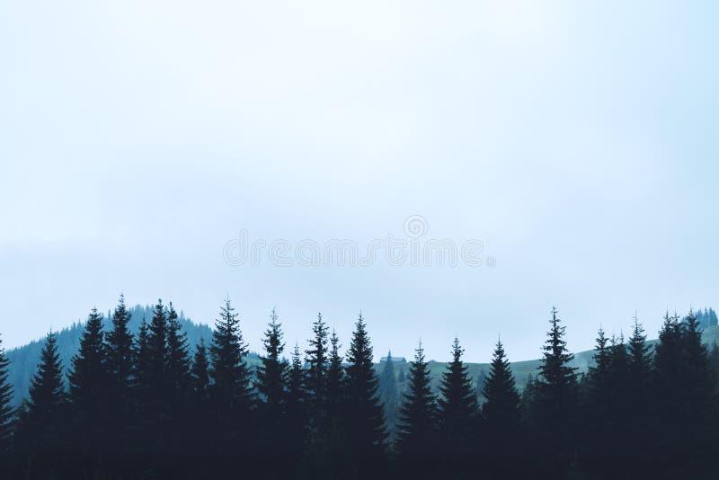 Bergkonturträd arkivbild