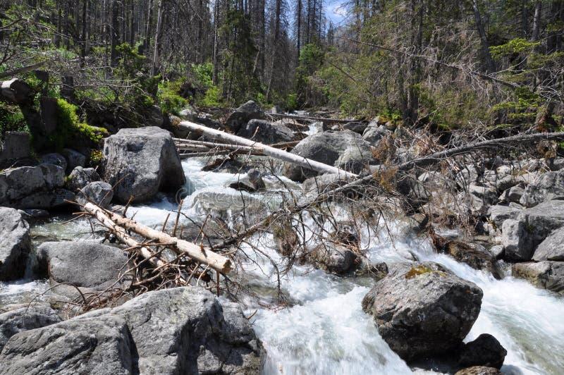 Bergkreek in het bos royalty-vrije stock fotografie