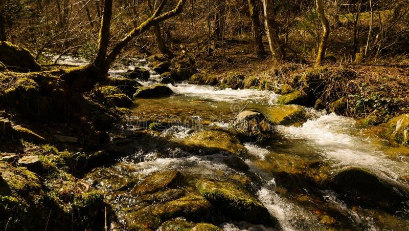Bergkreek tijdens de lentetijd royalty-vrije stock foto's