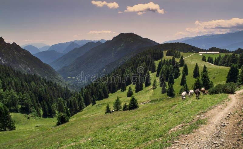 Berglandschaft in den Alpen nah an Ponte Arche, Italien stockbild