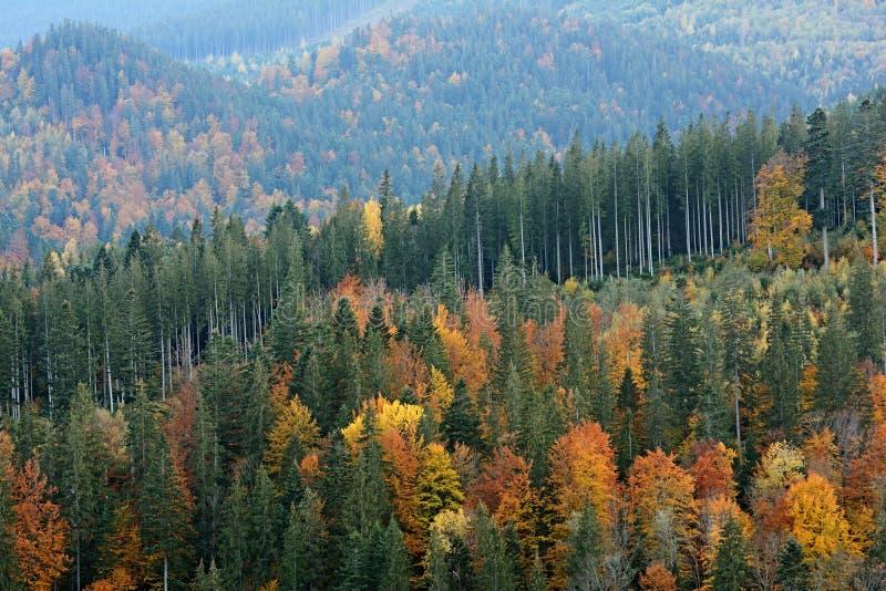 Berglandschaft des schönen Herbstwaldes in den ukrainischen Karpaten lizenzfreie stockbilder