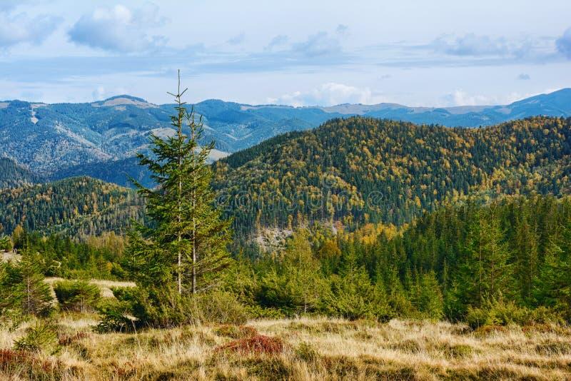 Berglandschaft des schönen sonnigen Tages in den ukrainischen Karpaten stockbilder