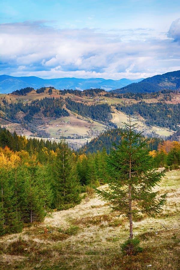 Berglandschaft des schönen sonnigen Tages in den ukrainischen Karpaten stockfotografie