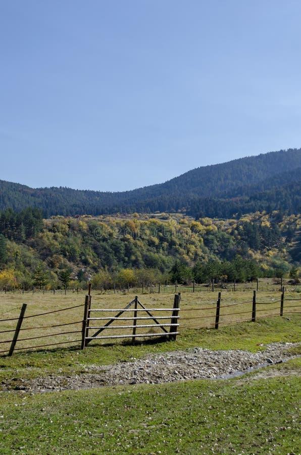Berglandschaft mit anders als Bäumen im ehrwürdigen herbstlichen Wald und in der Lichtung, Rila-Berg stockbilder