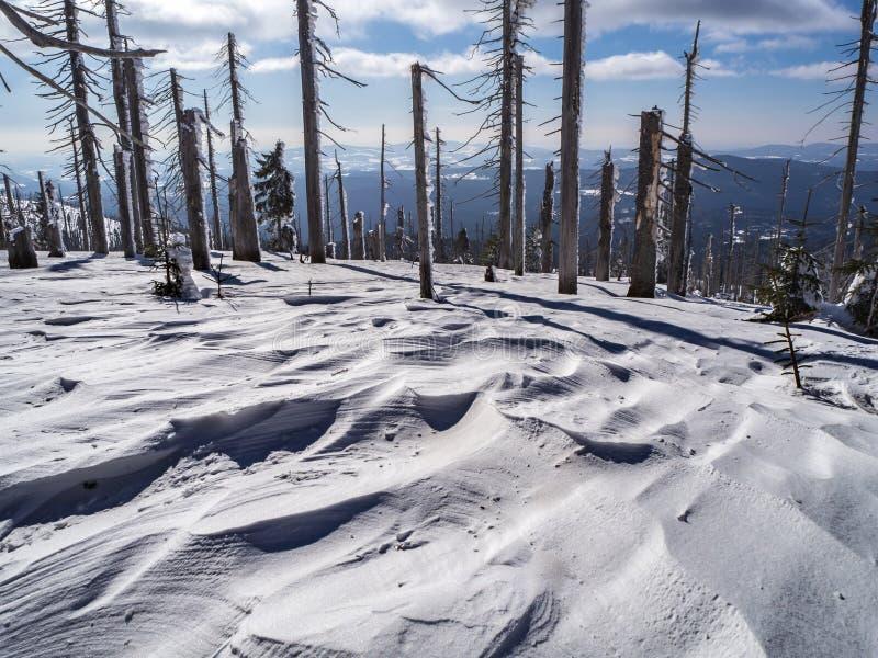 Berglandschaft mit Bäumen und ausführlichen Schneerissen stockfoto