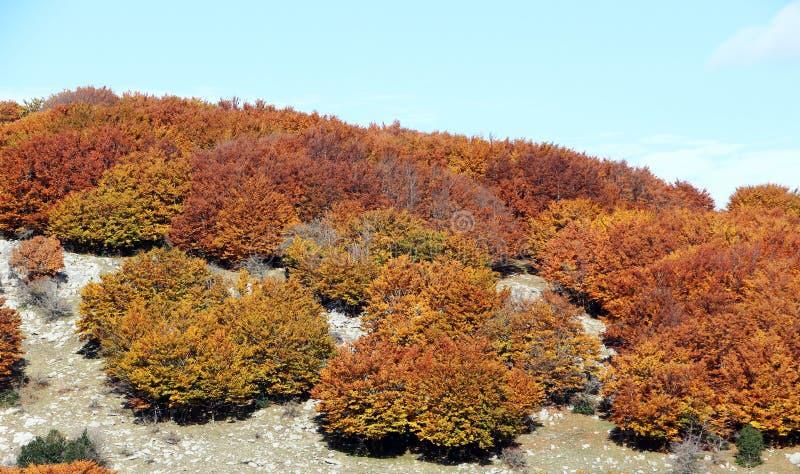 Berglandschap, in de herfst, met beuken stock afbeelding