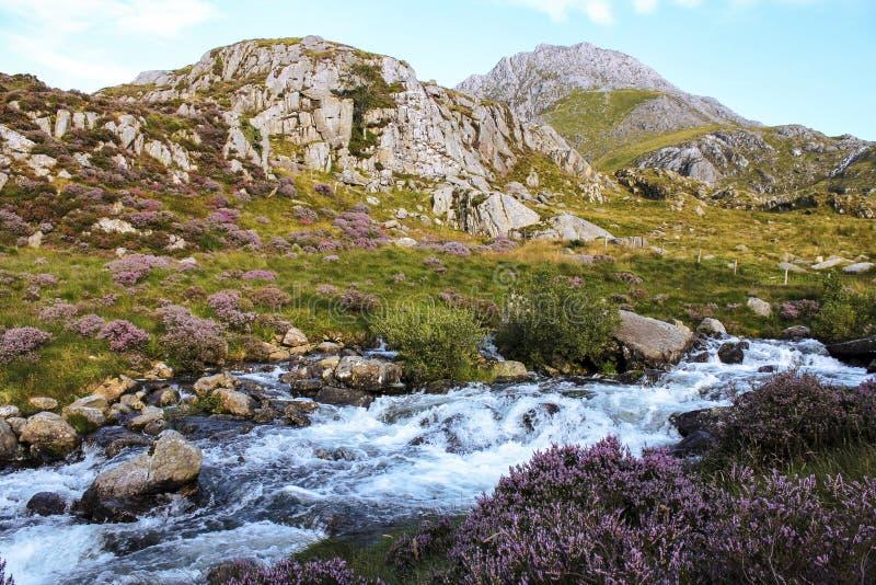 Berglandschap de Noord- van Wales met heide en draperende stroom royalty-vrije stock afbeelding