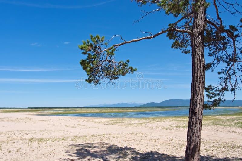 Berglandschap met blauwe rivier en een pijnboom royalty-vrije stock foto